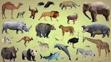 Animals (Spot the Connection?)